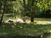 zoo_lj5_razred_2020_21_074